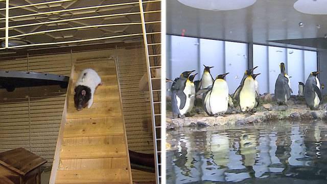 Happy End für Marco / Neues Zuhause für Pinguine