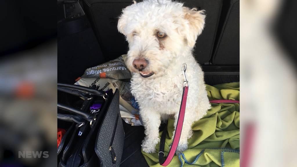 "Hündin ""Jenny"" überlebt Hundeköder dank Notoperation"