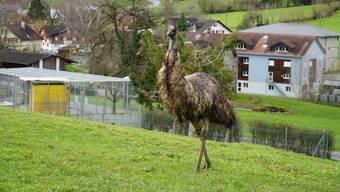 Das neue Domizil der beiden Emus befindet sich im Kanton St. Gallen.