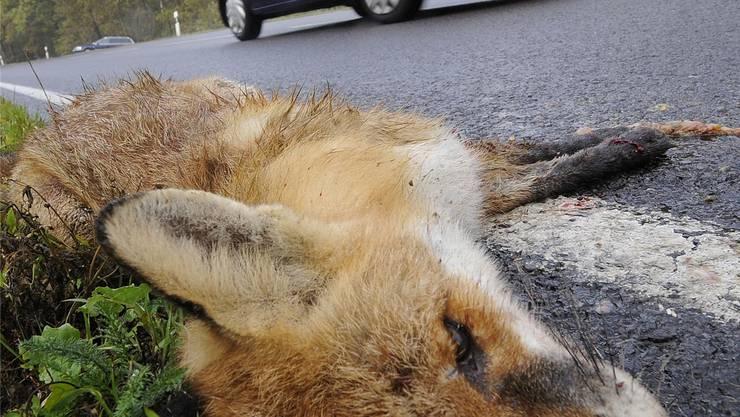 300 bis 400 Wildtiere sterben jährlich auf Solothurner Strassen. Bild: Holger Hollemann/Key