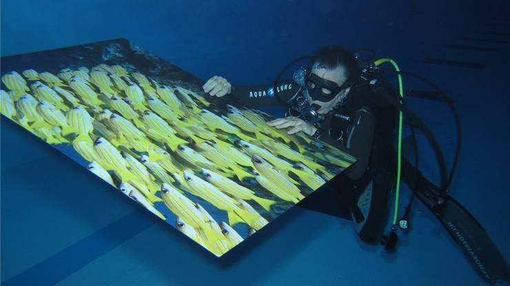 Unterwasser-Weltausstellung nennt Felix Umbricht seine Ausstellung scherzhaft.