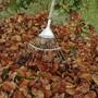 Kostet nichts und ist zuhauf vorhanden: Falllaub schützt Pflanzen. Bild: Shutterstock