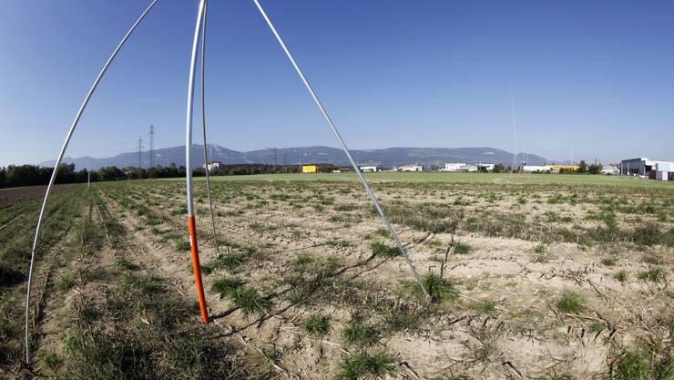 Kühne + Nagel will auf diesem Feld in Derendingen ein Logistikzentrum bauen
