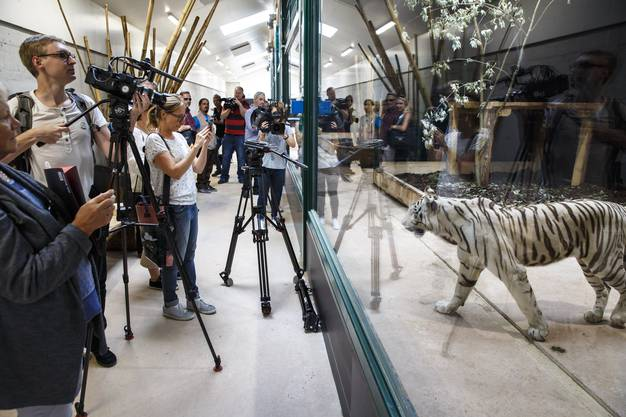An der Neueröffnung des Siky Park treffen Tiger auf Medienleute