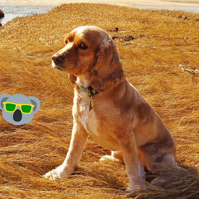 Hund rettet Leben von seinem Herrchen – in dem er ihm immer wieder über den Mund leckte