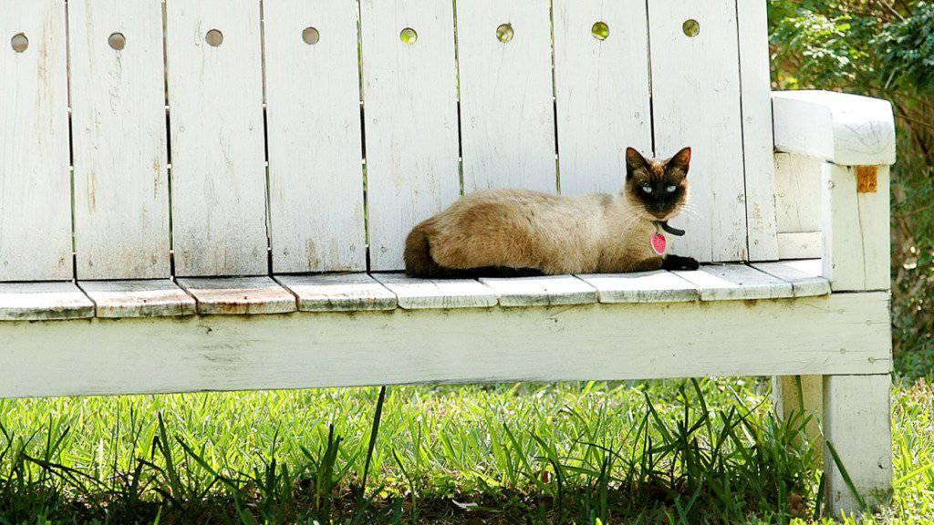 Das Bundesgericht hat sich zwei Mal mit dem Streit um eine Waadtländer Katze befassen müssen. (Themenbild)