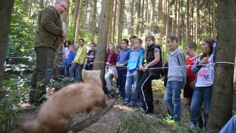 Der Marder ist präpariert, aber Hans Keiser erzählt lebendig vom Raubwild in unseren Wäldern.
