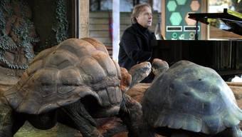Die paarungsunwilligen Schildkröten und Richard Clayderman