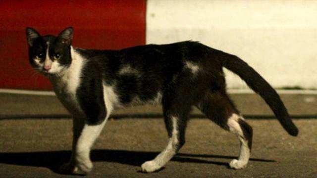 Eine Katze sollte Fluchtwerkzeug ins Gefängnis schmuggeln (Symbolbild)
