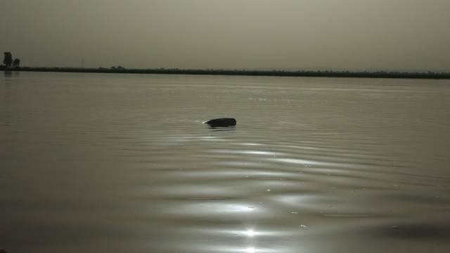 Ein Koffer treibt nach dem Bootsunglück in Mali im Wasser