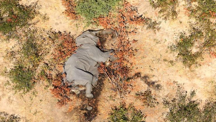 In Botswana lebt rund ein Drittel aller Elefanten Afrikas.