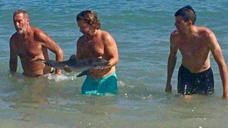 Badegäste reichen den Delfin an einem Strand in Südspanien herum.
