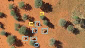 Eine mit künstlicher Intelligenz analysierte Luftaufnahme: Tiere sind blau eingerahmt, gelb gekennzeichnet sind Landschaftselemente.