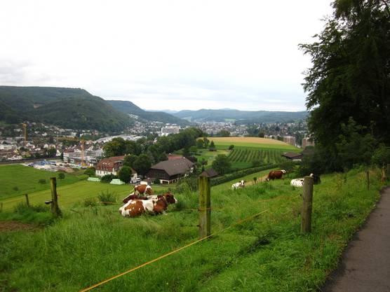 Im Hintergrund die Kantonshauptstadt Liestal. Und die Kühe, auch die sind noch auf Boden von Liestal. Wo gibat es dies noch, die Hauptstadt und auch noch die Natur.