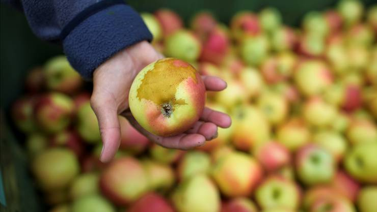 Apfel mit Frostschaden: Im April wurden die Schweizer Apfelbauern von einer Kältewelle getroffen GIAN EHRENZELLER/Keystone