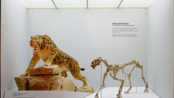 Das Naturhistorisches Museum Basel erhält eine neue Heimat. (Archiv)