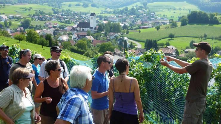 Winzer vermittelten den Teilnehmern der Weinwanderung viel Wissenswertes.  ghi