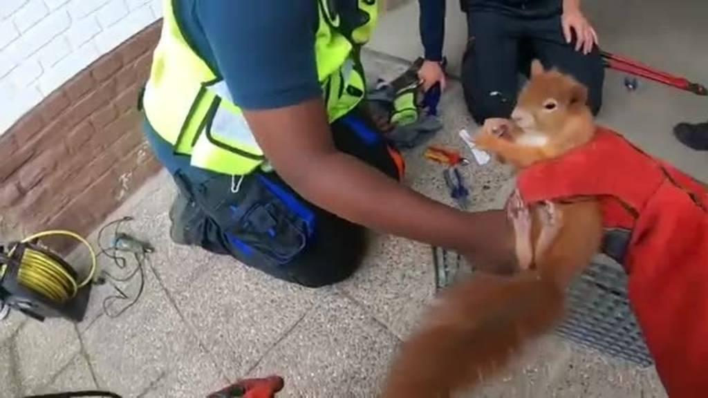 Helfer retten Eichhörnchen aus Schacht