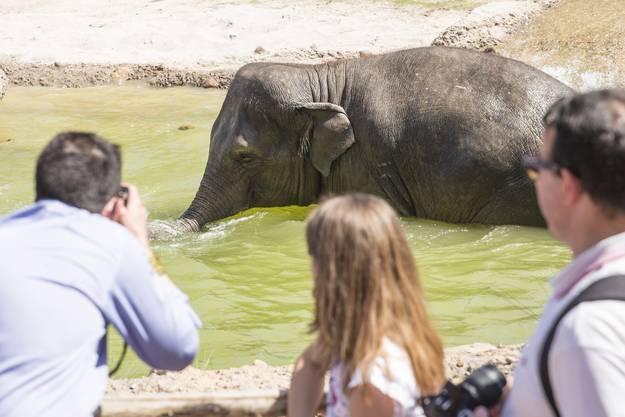 Auch die Elefanten geniessen das heisse Pfingstwochenende.