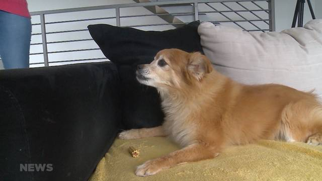 Kriminelle locken Hundebesitzer in die Falle