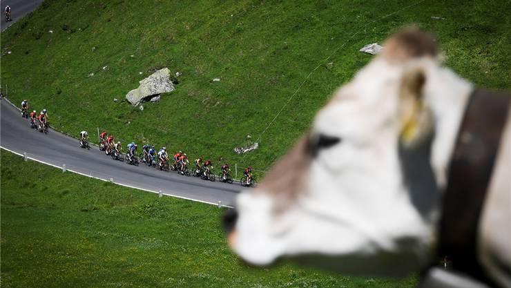 Trotz schöner Landschaft und attraktivem Fahrerfeld: Die Tour de Suisse muss sich neu erfinden – und wird verkürzt.Bild: Gian Ehrenzeller/Keystone