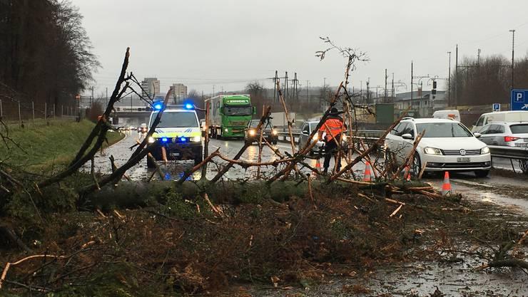 Drei umgestürzte Bäume behinderten gegen Mittag auch den Verkehr auf der A1 zwischen Mägenwil und Aarau-Ost.