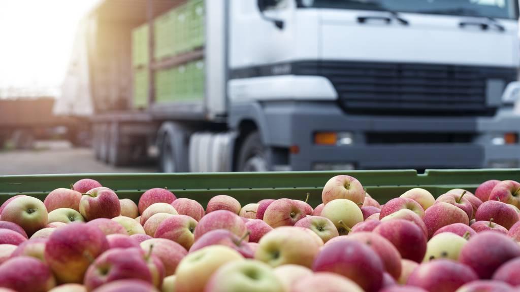 Die ersten Äpfel der Saison sind klein – nun kommen die grossen