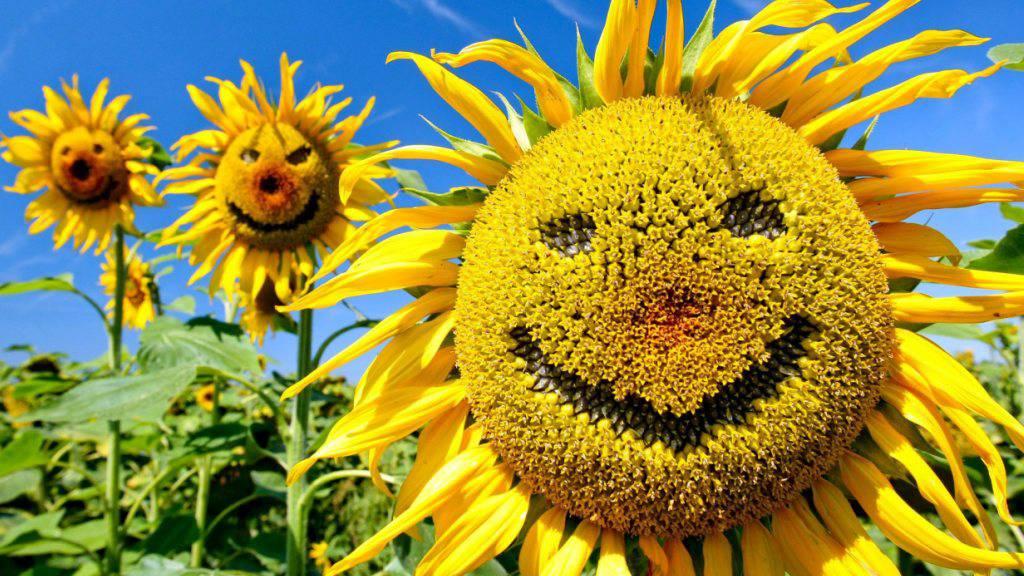 Welches ist das glücklichste Land der Welt? Laut dem neuesten Update des Weltglücksberichts liegt die Schweiz nur knapp hinter dem Spitzenreiter Dänemark. (Archiv)