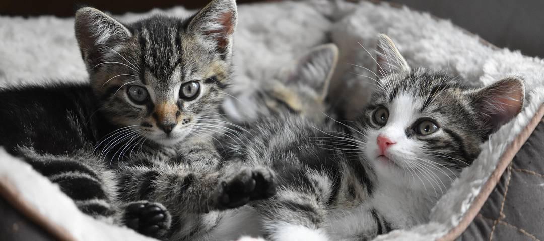 Katzen: Wir lieben sie und doch sind sie uns ein Rätsel.