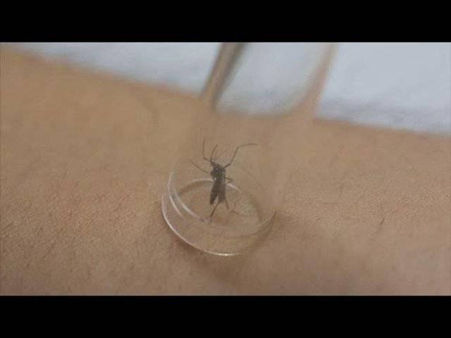 Was wissen wir über Zika? Die Antworten der Epidemiologin Laura Rodrigues
