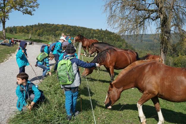 Begegnung mit Pferden auf der Wanderung