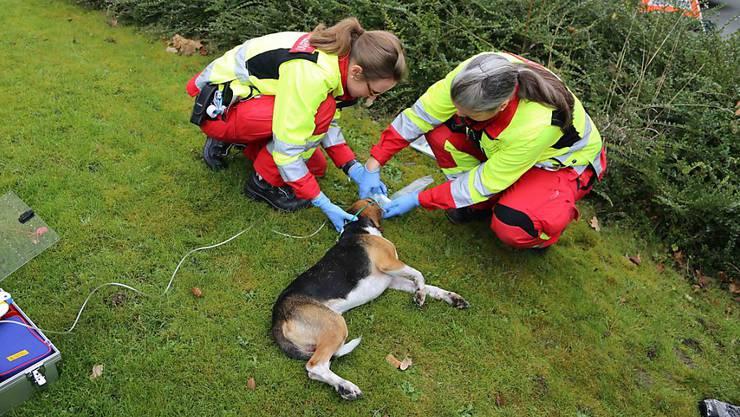 Ein Hund erlitt bei einem Küchenbrand eine Rauchgasvergiftung. Mitarbeitenden des Rettungsdienstes und der Tierrettung kümmerten sich um das Tier.