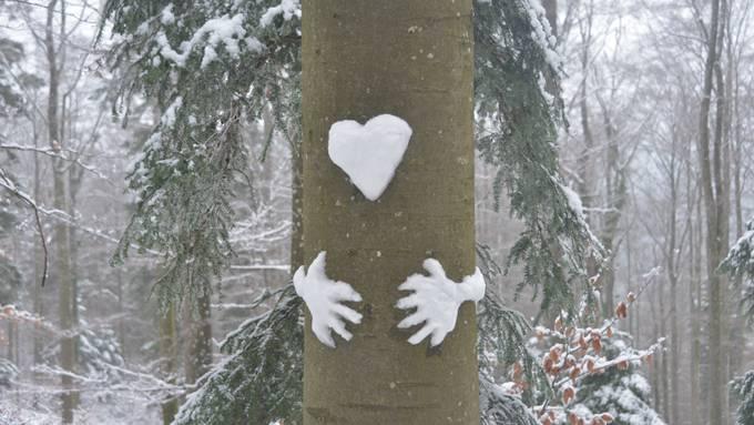 Liebe ist ... bäumig!