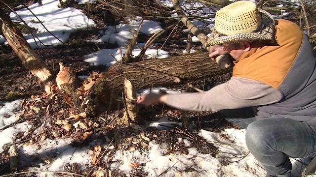 Kurs lernt das Überleben in der Wildnis
