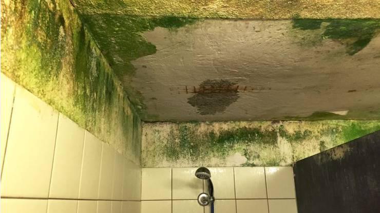 Heftiger Algen- und Schimmel-Befall an der Decke der Dusche