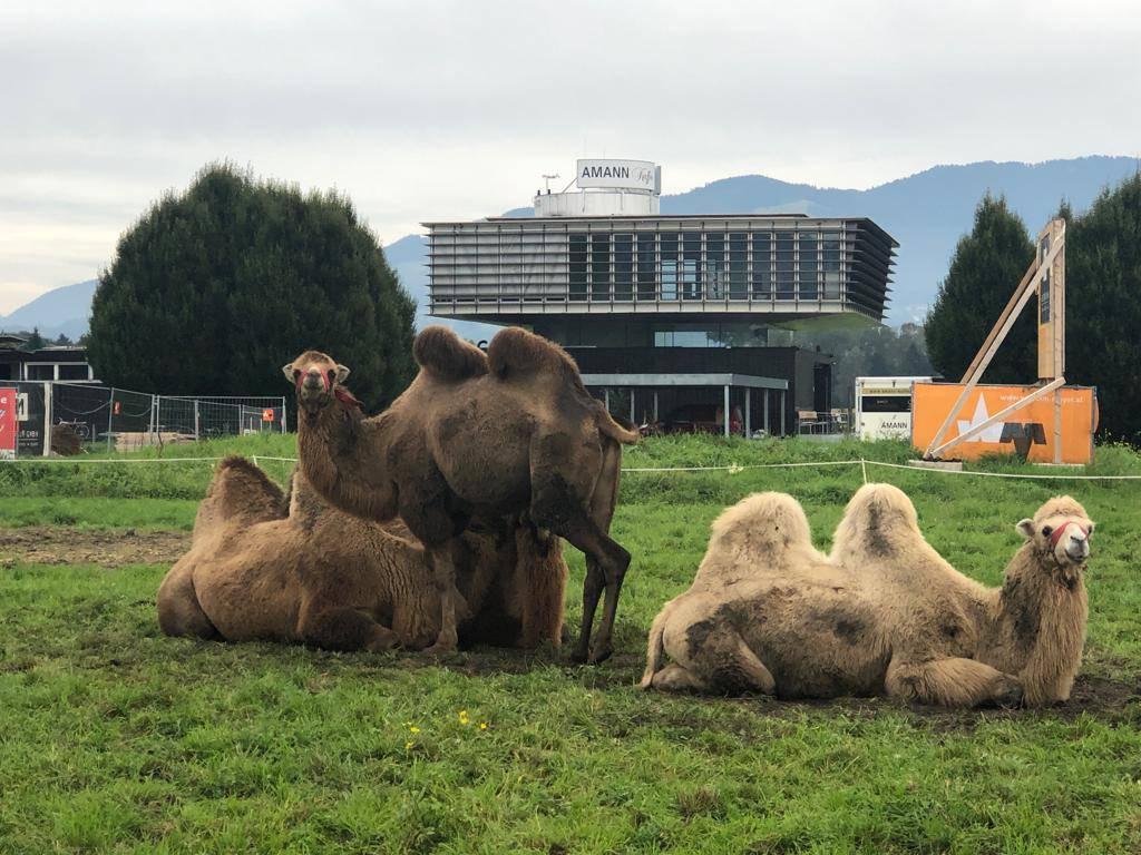 Das Fehlen der Tiere hat den Circus Breu und den Circus Berlin in finanzielle Notlagen gebracht. (© FM1Today)