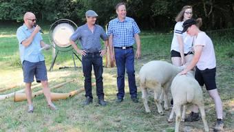 Allmendpräsident Reinhard Studer (l.) überreicht Paul Ackermann (2.v.l.) für seine Hirtentätigkeit zwei Schafe. Darüber staunt auch Bergmeister Peter Uebelhard.