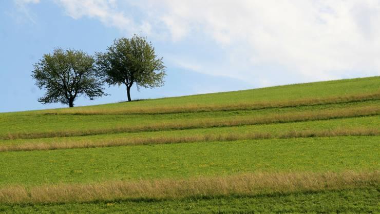 Das Bild entstand in Thalheim, am Nordhang der Hombergegg. (Bild: Peter Belart)