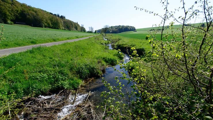 Der Bibernbach wurde 2011 auf einer Strecke von fast 350 Metern revitalisiert. Jetzt hat sich ein lebendiges Ökosystem entwickelt.