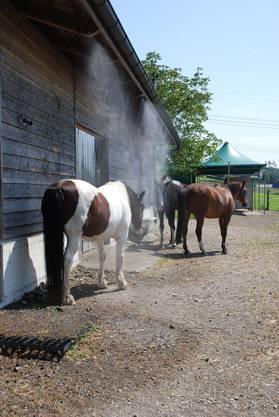 Drei bis vier Mal am Tag geniessen die Pferde eine Dusche