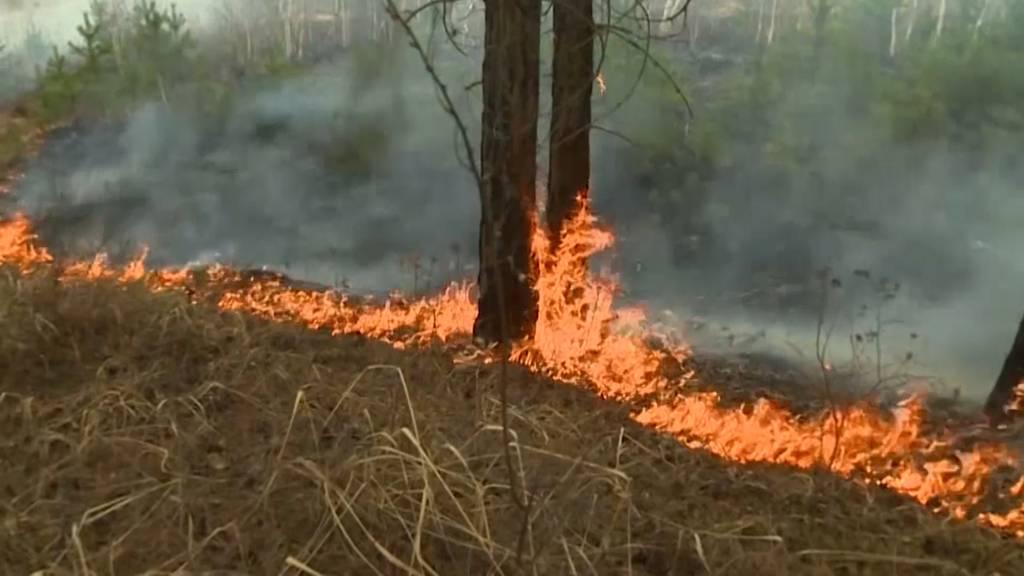 Verschlimmern flüchtende Städter die Waldbrände in Russland?