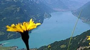 Alpwiese auf Lungern-Schönbüel mit Blick auf den Brienzersee