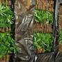 Mit 2000 Hanfpflanzen im Gepäck an der Basler Grenze erwischt