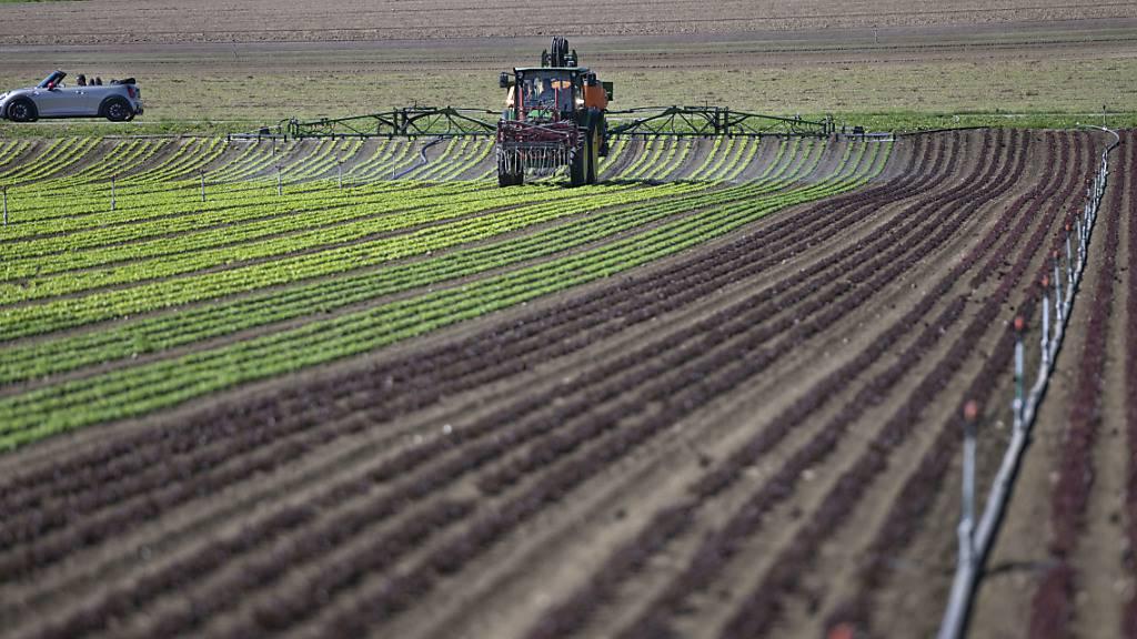 Der Einsatz von Pflanzenschutzmitteln in der Landwirtschaft soll im Kanton Thurgau reduziert werden. (Symbolbild)