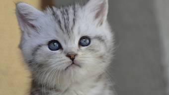 Der Autolenker wollte einer Katze ausweichen, weshalb er gegen den dortigen Radarkasten prallte. (Symbolbild)