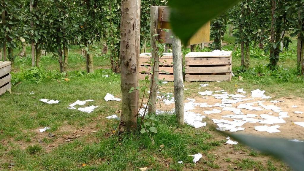 Zerstörung auf Juckerfarmen