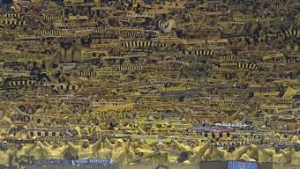 Die gelbe Wand von YB bei Manchester United