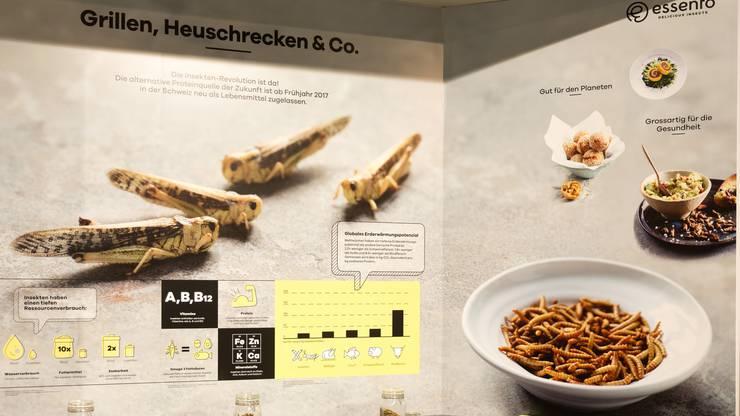Die Dauerausstellung «Welt des Essens« der Umwelt Arena diskutiert Insekten als mögliche Alternative zu Fleisch auf unserem Speiseplan.