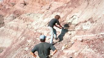 Grabung im Junggar-Becken in Nordwest-China im Jahr 2001: Fundstelle des Dinosaurierknochens mit Bissspuren. (Andreas Matzke, Uni Tübingen)