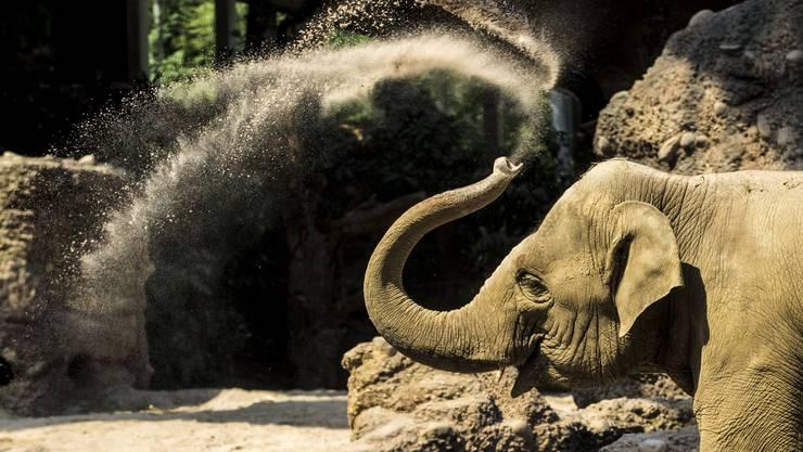 Erstes Wochenende im neuen Elefantenpark des Zürcher Zoos